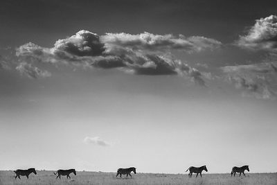 8901-Zebras_under_the_clouds_Maasai_Mara_Kenya_2006_Laurent_Baheux