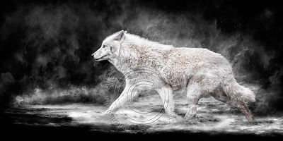 Art-Digital-Alain-Thimmesch-Loup-32