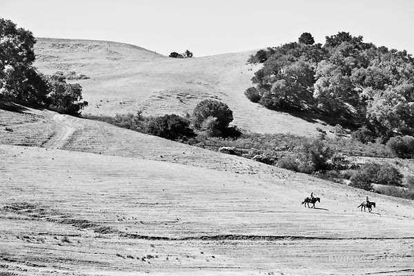 SANTA YNEZ VALLEY RANCH HILLS SANTA BARBARA COUNTY CALIFORNIA BLACK AND WHITE