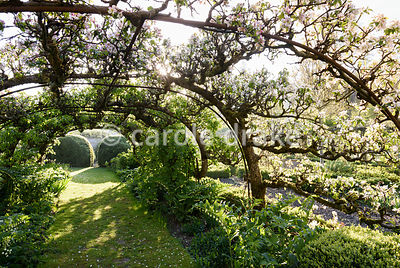 Apple tunnels in the Tunnel Garden at Heale House, Middle Woodford, Wiltshire on a frosty April morning