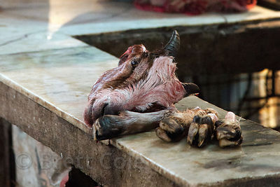 A goat head and feet sit on a bench at a market in Shyambazar, Kolkata, India. Hygenic standards with regards to meat processing are lacking in India.