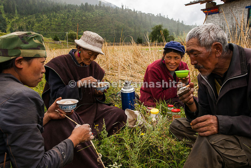 A family of farmers take a tea break before getting back to harvesting barley, which is mixed with yak butter tea to prepare tsampa, a staple of the Tibetan diet.