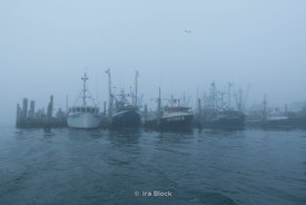 A fishing boats dock in Lake Montauk.