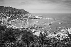 Catalina Island Avalon Harbor Black and White Photo