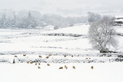 Hawes, North Yorkshire, covered in snow.