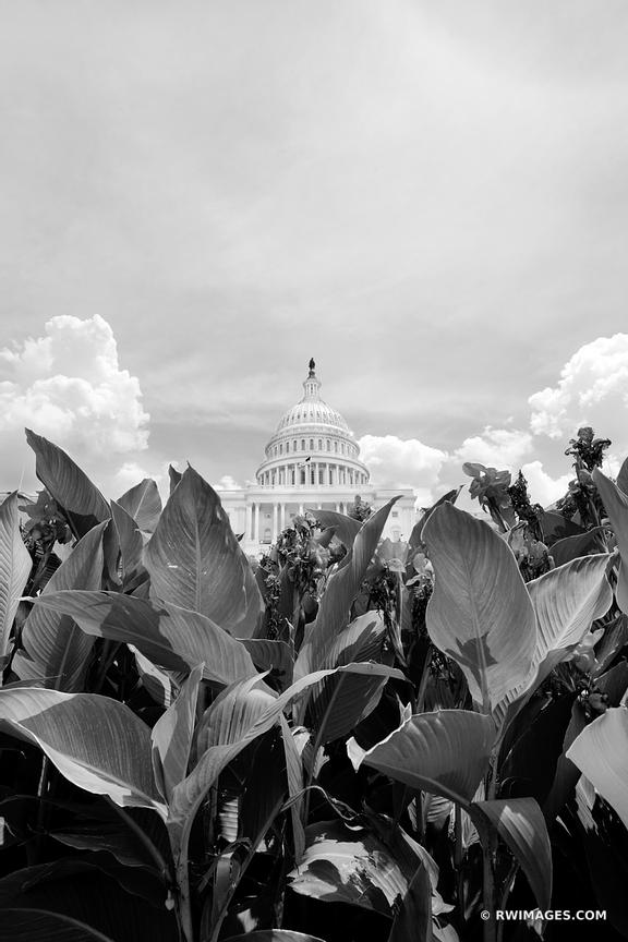 US CAPITOL WASHINGTON DC BLACK AND WHITE VERTICAL
