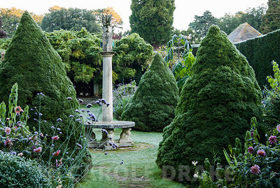 Frosty morning in the Sundial Garden surrounded by yew hedging and containing tree ferns, conical piceas and exotic herbaceous plants including salvias, dahlias and ricinus. Exbury Gardens, Exbury, Hants, UK