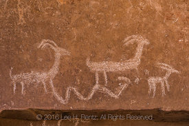 Bighorn Sheep Petroglyph in Nine Mile Canyon