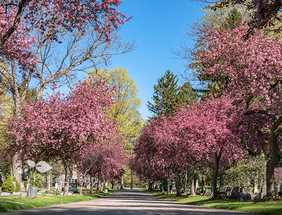 Erie Cemetery Association - SPRING photos