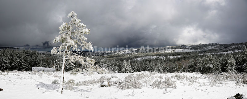 Trees and snow in Serra da Estrela Natural Park, Beira Alta, Portugal
