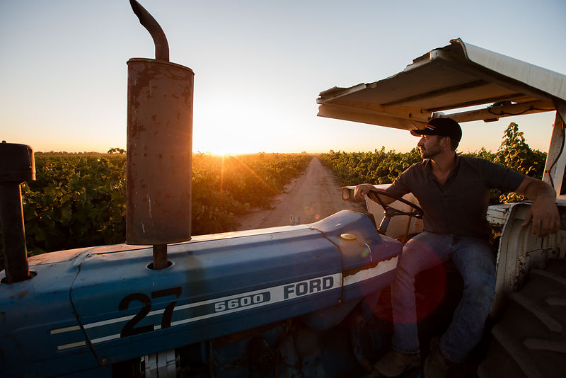Winegrape grower Roy Woltkamp of Oak Ridge Winery in Lodi, California by photographer Jason Tinacci