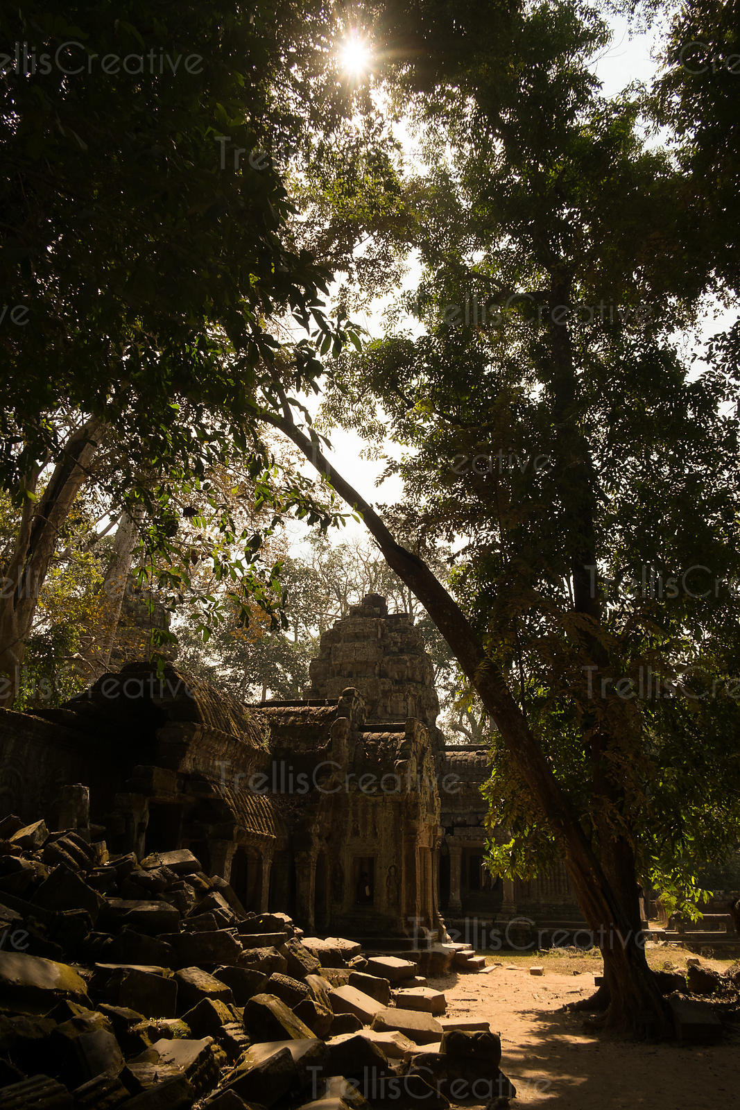 Tress with the old temple ruins at Angkor Wat