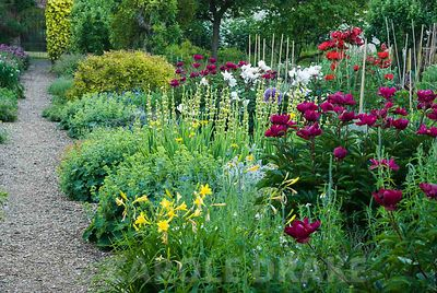 Herbaceous borders in the kitchen garden include oriental poppies, Papaver orientale 'Beauty of Livermere', peonies, tall yellow Asphodeline lutea, yellow day lilies and hardy geraniums. Edmondsham House, Cranborne, Wimborne Minster, Dorset, UK