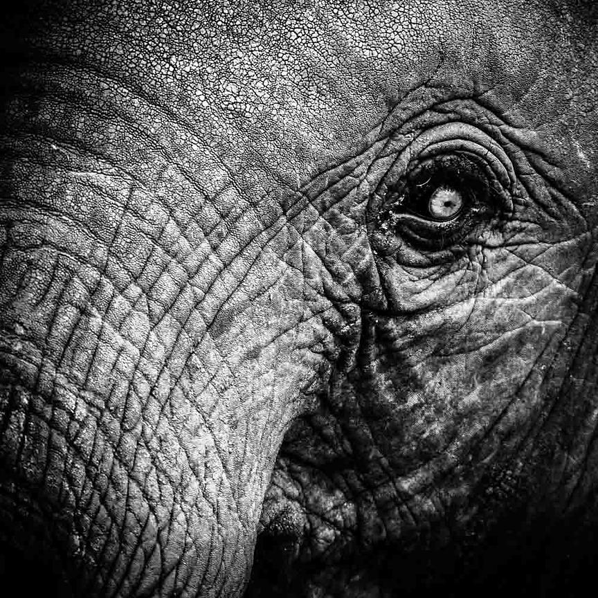 7620-Eye_of_elephant_Tanzania_2007_Laurent_Baheux