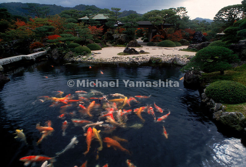 The garden of the Adachi Museum in in Matsue might be taken for an illusion, were it not for the multi-colored carp thrashing around in the pond.