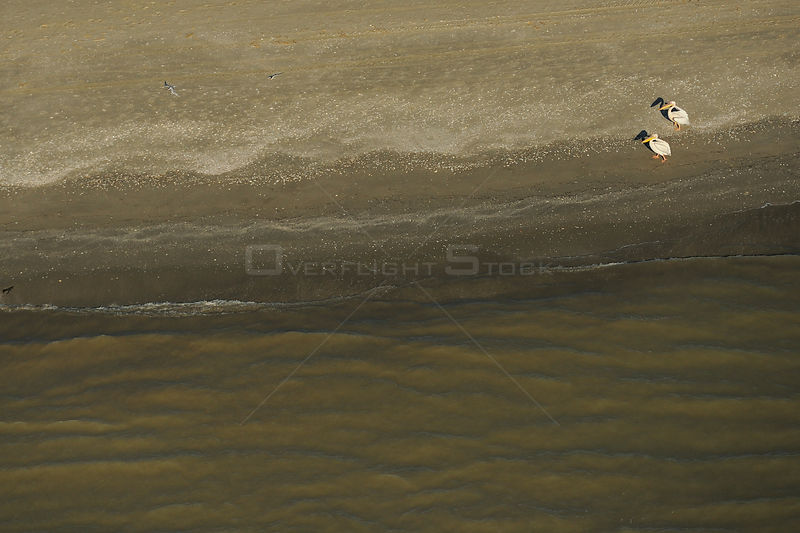 Eastern white pelicans (Pelecanus onocrotalus), aerial view of two standing on shoreline of Danube Delta, Danube delta rewilding area, Romania, June 2012