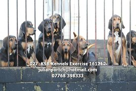 027__KSB_Kennels_Exercise_161212