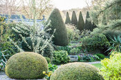 View from the drive across clipped yew spheres with a rich medley of trees and shrubs beyond including serrated yew hedge. York Gate Garden, Adel, Leeds, Yorkshire