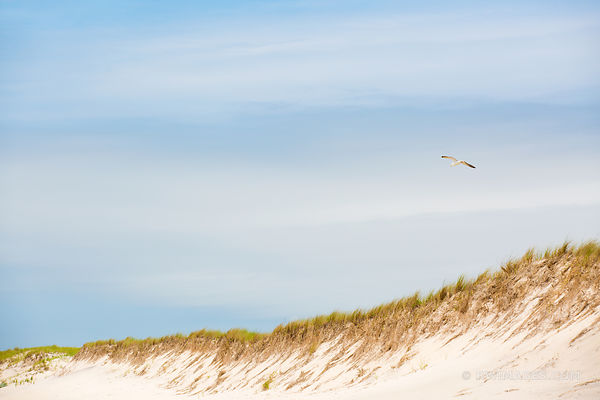 SOUTHAMPTON LONG ISLAND BEACH DUNES SEAGULL COLOR