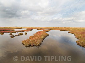 Autumn colour on Saltmarsh on Holkham National Nature Reserve North Norfolk October