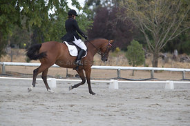 SI_Festival_of_Dressage_300115_Level_3_NCF_0102