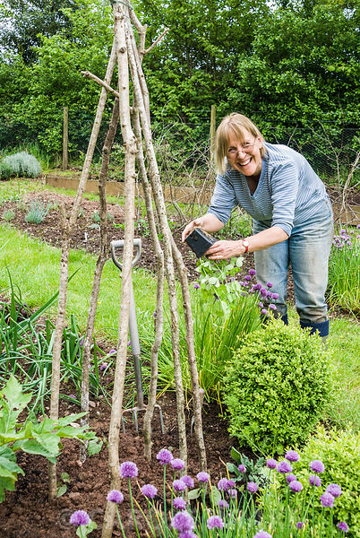 Linda Lindley planting sweetpeas to climb a hazel wigwam in the vegetable garden. Hidden Valley Nursery, Old South Heale, High Bickington, north Devon, UK
