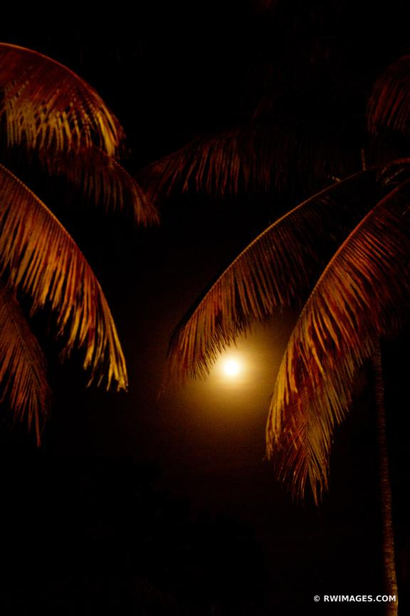 PALM TREES AND THE MOON MIAMI FLORIDA
