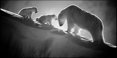 Eternal tenderness on fragile ice, Baffin Island Canada 2016 © Laurent Baheux