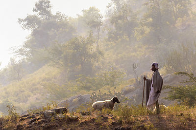 Sheep herder in the Aravali mountains, Ajaypal, Rajasthan, India