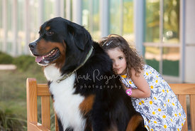 Little girl hugging her Bernese Mountain Dog