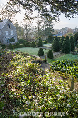 A slope of hellebores is illuminated above the formal garden featuring clipped yew, bay and Portugese laurels. Old Rectory, Netherbury, Dorset, UK