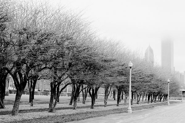 GRANT PARK WINTER CHICAGO BLACK AND WHITE