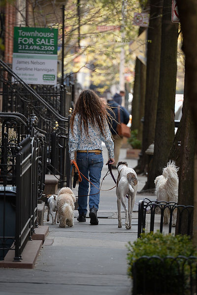Un dogsitter ( Greenwich Village )