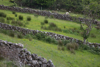 Drystone walls, Connemara, Ireland