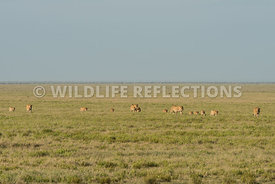 lion_plains_walk_02232015-2