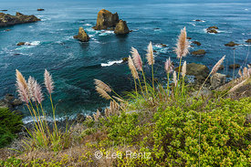 Grasses and Sea Stacks along the Northern California Coast, USA