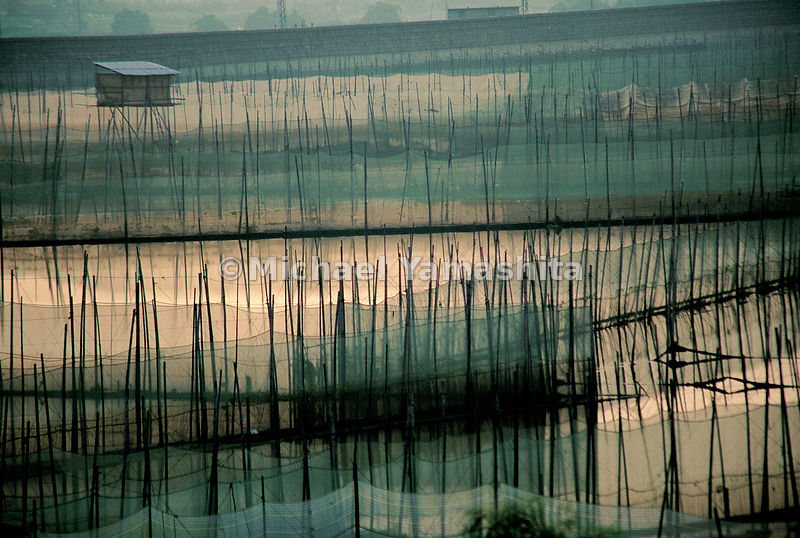 Looking like matchsticks linked by fishing nets, its likely that Zheng He passed hundreds of scenes like this while embarking on his journeys to the South China Sea from a spot near Xiamen. China was the first to practice aquaculture.  Xiamen, Fujian, China