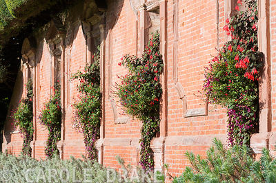 Lushly planted containers set into niches in the castle wall include fuchsia, lobelia, salvias and trailing Rhodochiton atrosanguineus, the purple bell vine. Powis Castle