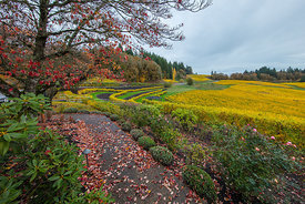Elk_Cove_Winery_Oregon-9850