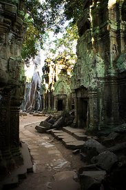 Cambodia - A tree with roots growing through temple.