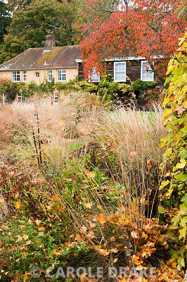 Grasses and herbaceous perennials including Stipa gigantea and Digitalis ferruginea in the walled garden. Broughton Buildings, Broughton, nr Stockbridge, Hants, UK