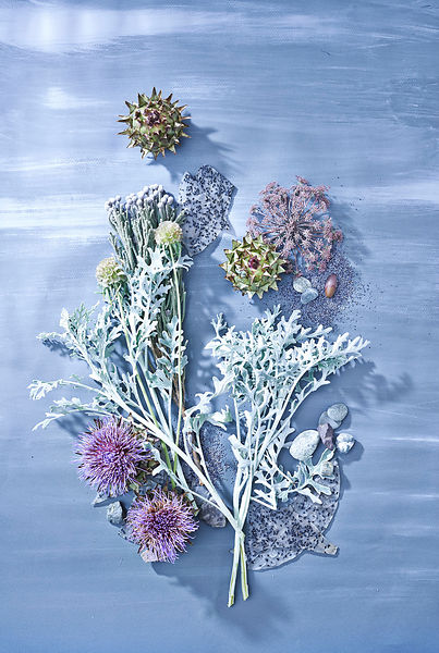 Botanical-still-life-air-blue_1