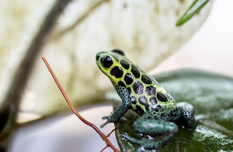Pav amphibians landingpage 2016 2000x550 d