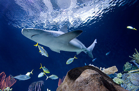 Pav wr2 shark 460x300 d
