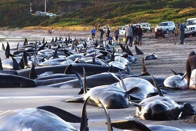 kitove