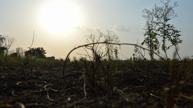 _83152989_dry_crop_farm-2