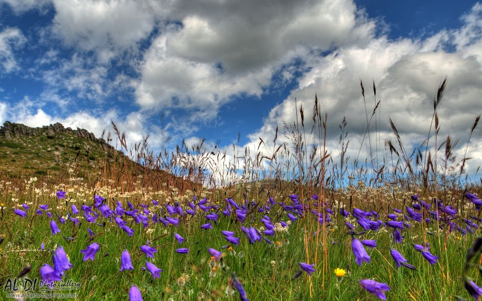 Belmeken - Zabcheto   Поляни с цветя от Белмекен - Зъбчето