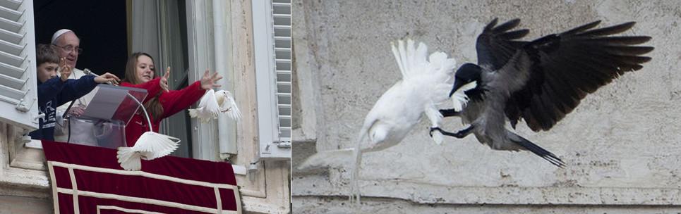 papa-gulubi-vrana