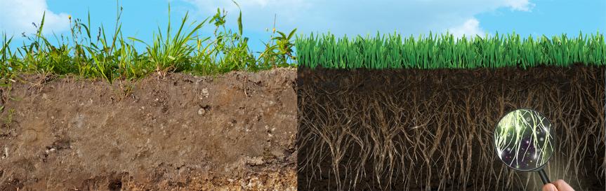 roots-soil-glass-863x273