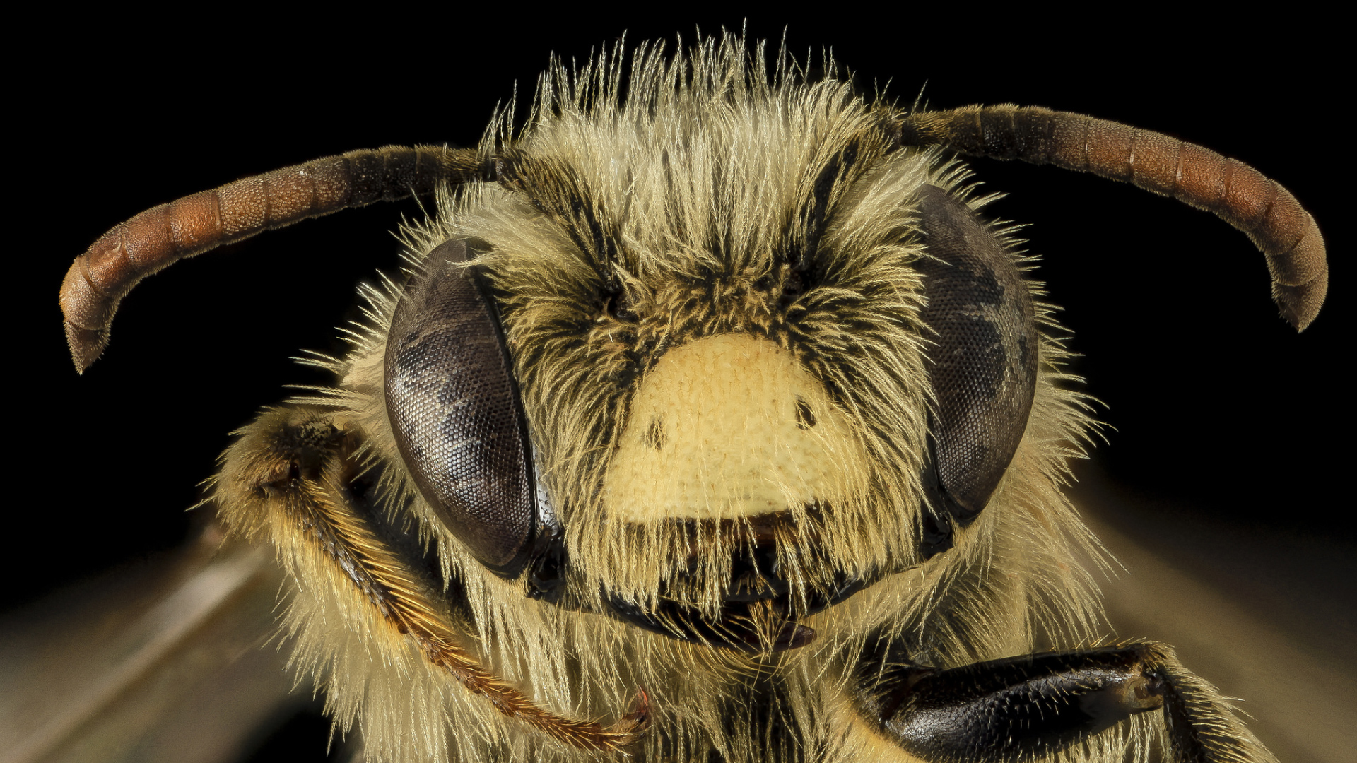 140711-droege-bees-vin__733600